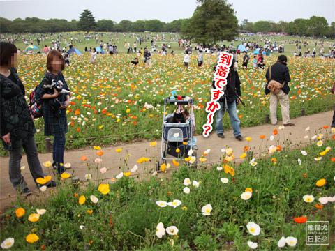 20120501_昭和記念公園5