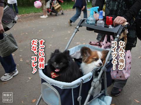 20120501_昭和記念公園2