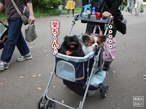 20120501_昭和記念公園1