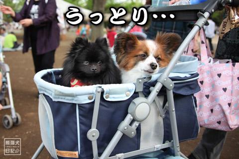 20120501_昭和記念公園9