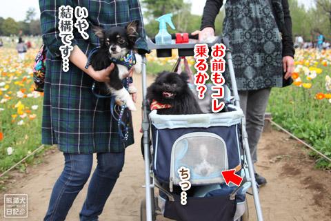 20120501_昭和記念公園11