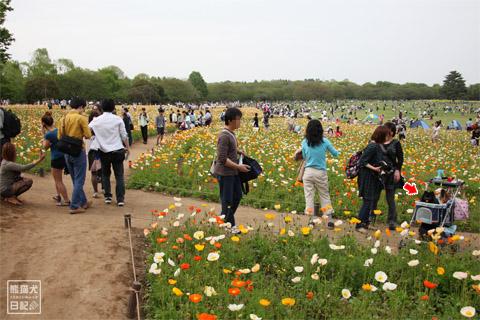20120501_昭和記念公園8