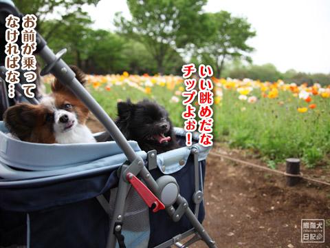 20120501_昭和記念公園7
