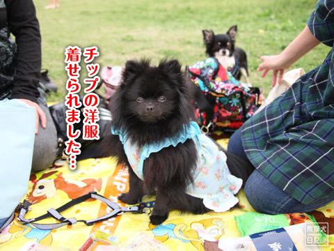 20120504_真熊の女装1