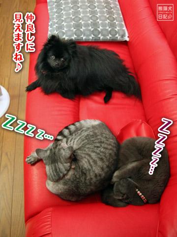 20120513_寒い土曜日4