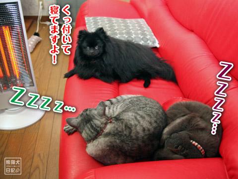 20120513_寒い土曜日3
