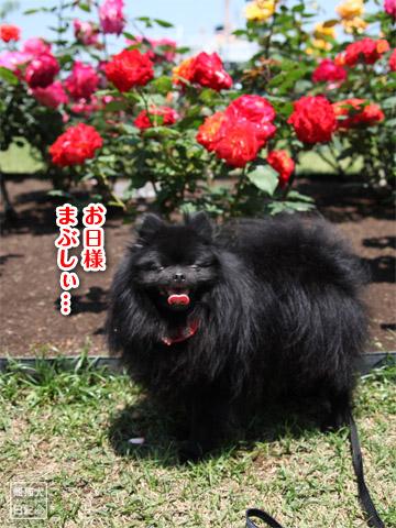 20120523_山下公園5