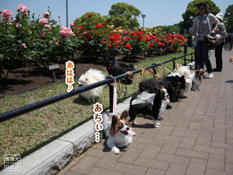 20120523_山下公園1