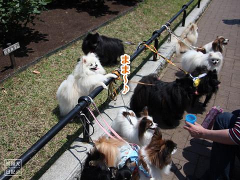 20120523_山下公園2