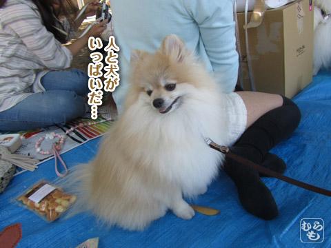 20120523_山下公園10