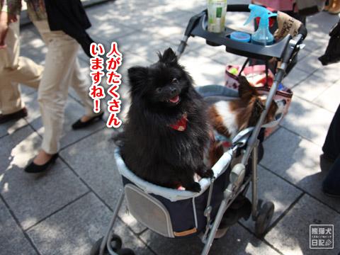 20120524_中華街6