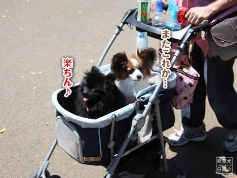 20120524_中華街2