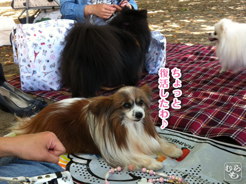 20120524_中華街9