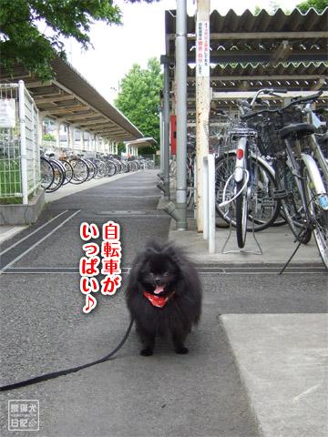 20120528_自転車3