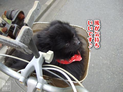 20120528_自転車5