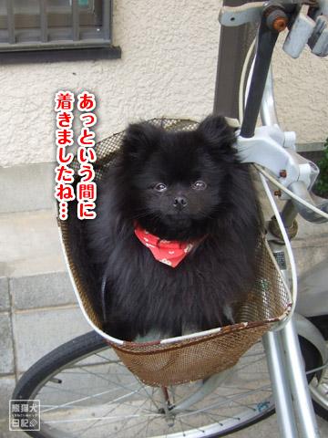 20120528_自転車7