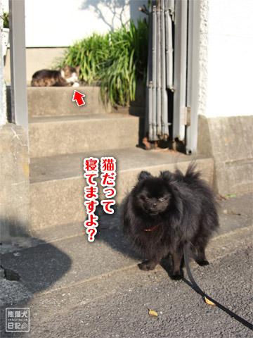 20120601_早朝1