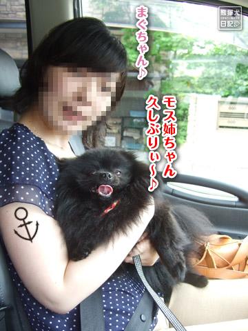 20120627_モコモコ1