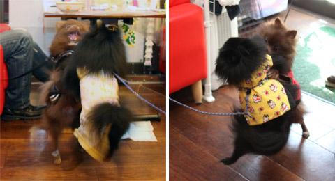 20120721_真熊の犬友達3-2