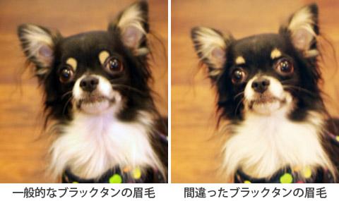 20120721_真熊の犬友達2-2
