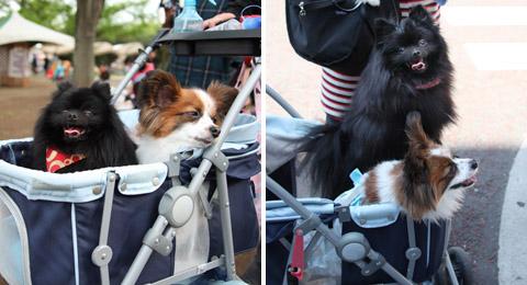 20120721_真熊の犬友達1-2