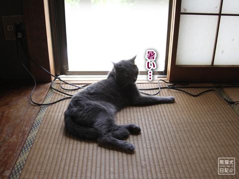 20120814_夏休み1