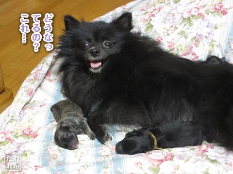 20120904_真熊Jr1
