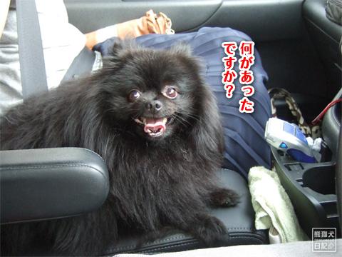 20120904_真熊Jr