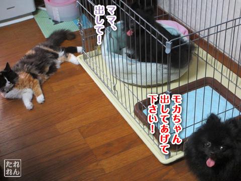 20120909_子作り合宿6