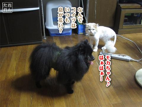 20120909_子作り合宿4