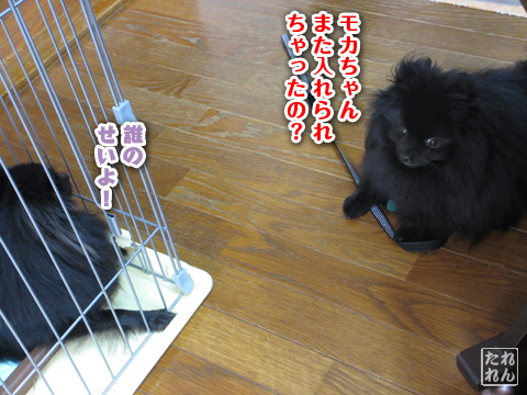 20120909_子作り合宿5