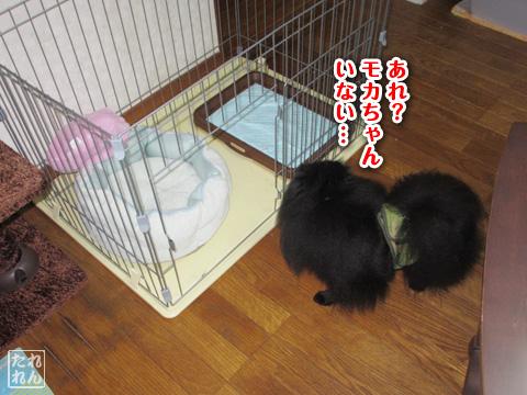 20120909_子作り合宿1