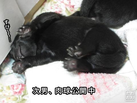 20120909_赤子たち6