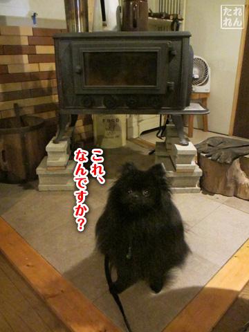 20120910_子作り合宿4