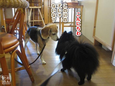 20120910_子作り合宿1