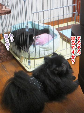 20120911_子作り合宿5