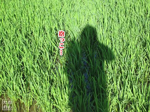 20120914_田舎道3