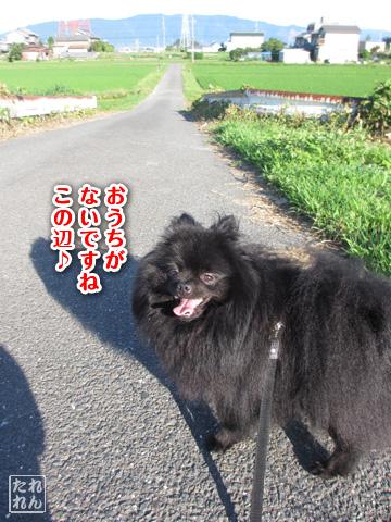 20120914_田舎道2