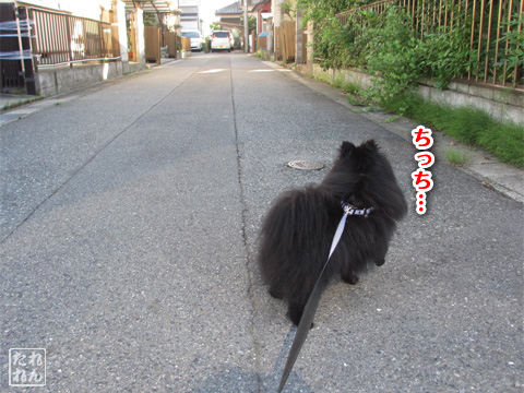 20120914_田舎道1