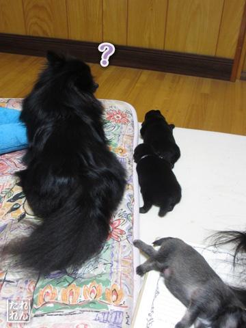 20120914_赤子4