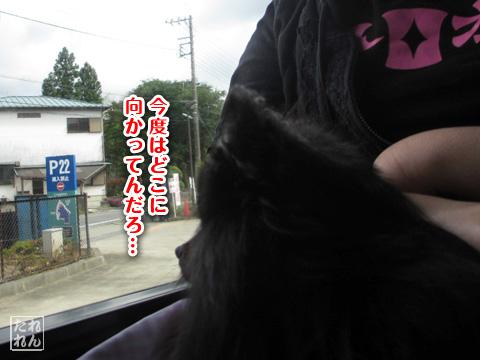 20120915_真熊の帰還4