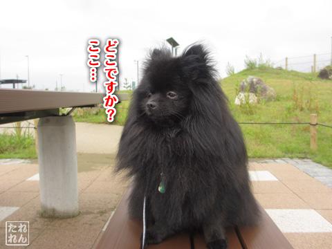 20120915_真熊の帰還1