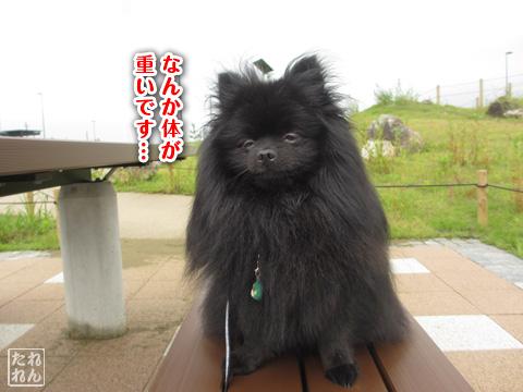 20120915_真熊の帰還2