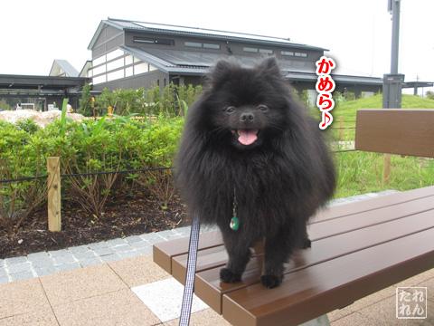 20120915_真熊の帰還3