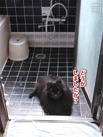 20120917_真熊1