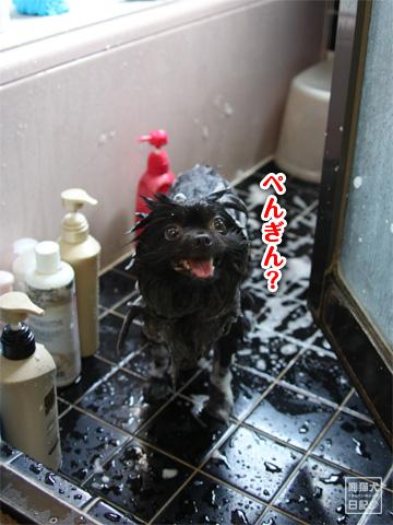 20120921_お風呂2