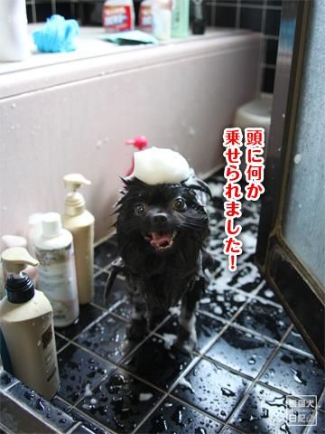 20120921_お風呂3