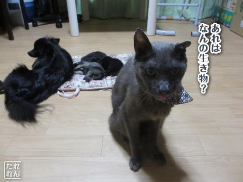 20120924_赤子たち5