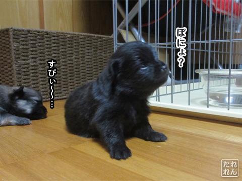20120924_赤子たち10