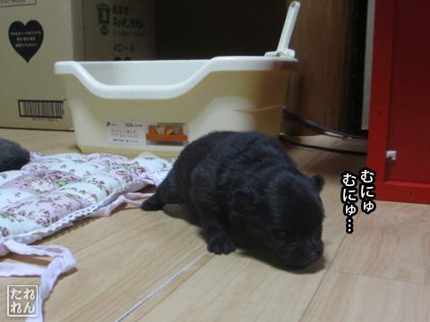 20120924_赤子たち7